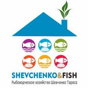 шевченко.png