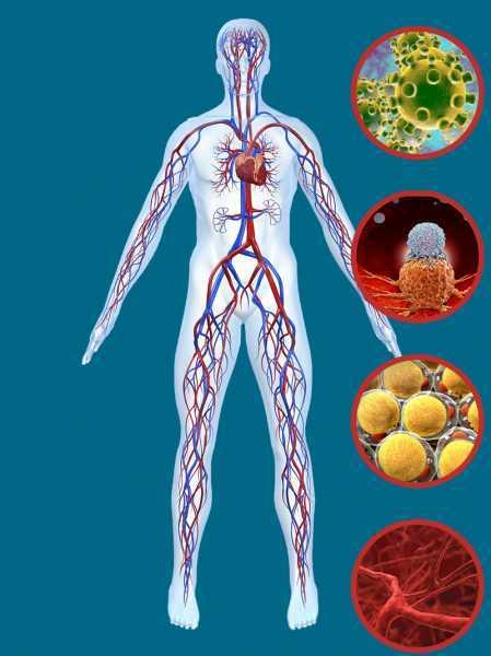 Элементарный продукт для сосудов, похудения и профилактики рака