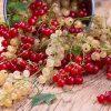 Полезные-свойства-красной-и-белой-смородины-+-простые-рецепты