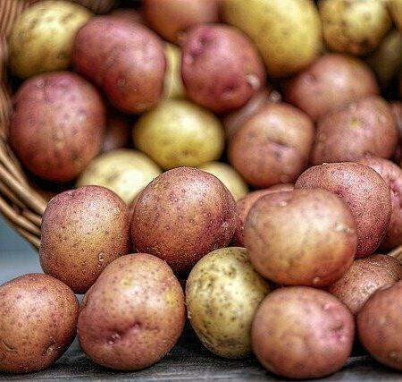 Картофель молодой, кг